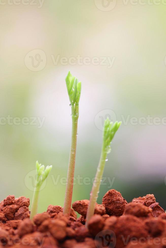 wachsende Pflanzen foto