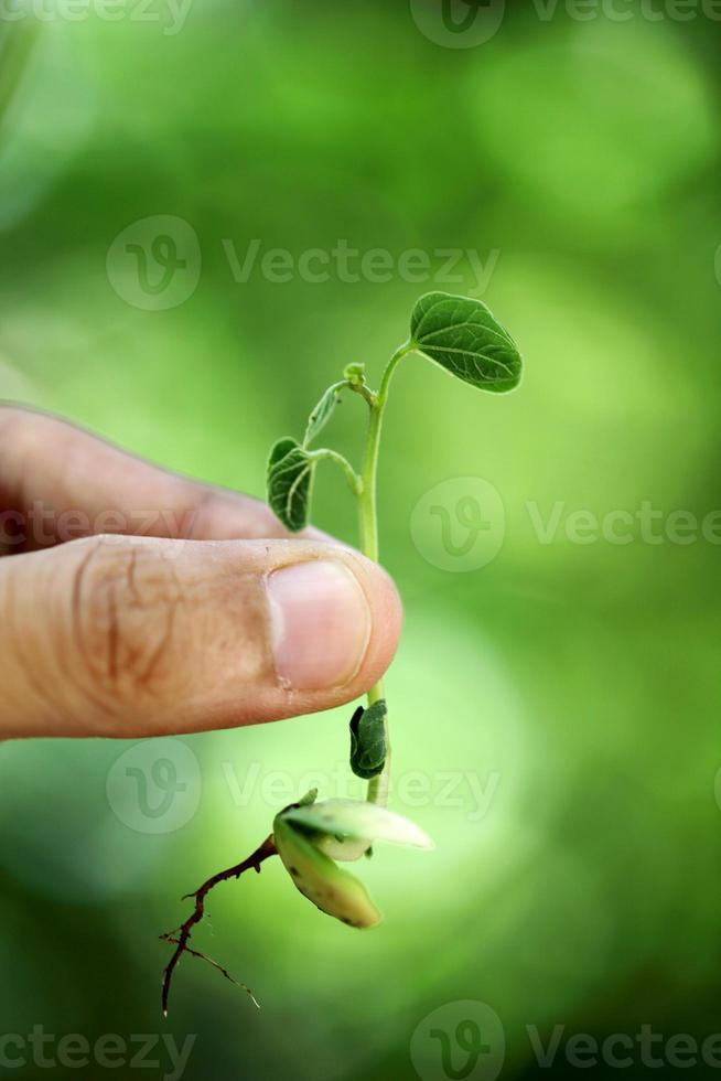 Hand hält kleine Pflanze foto