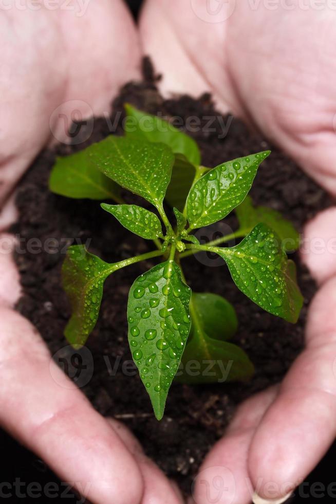 neugeborene Pflanze foto