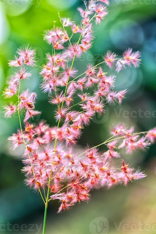 Die Blütenblätter schimmern bald im Sonnenlicht foto