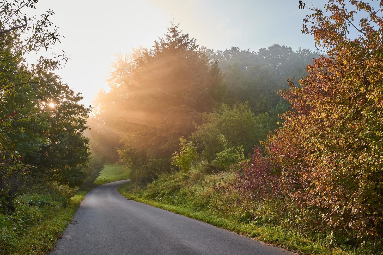 graue Asphaltstraße zwischen Bäumen foto