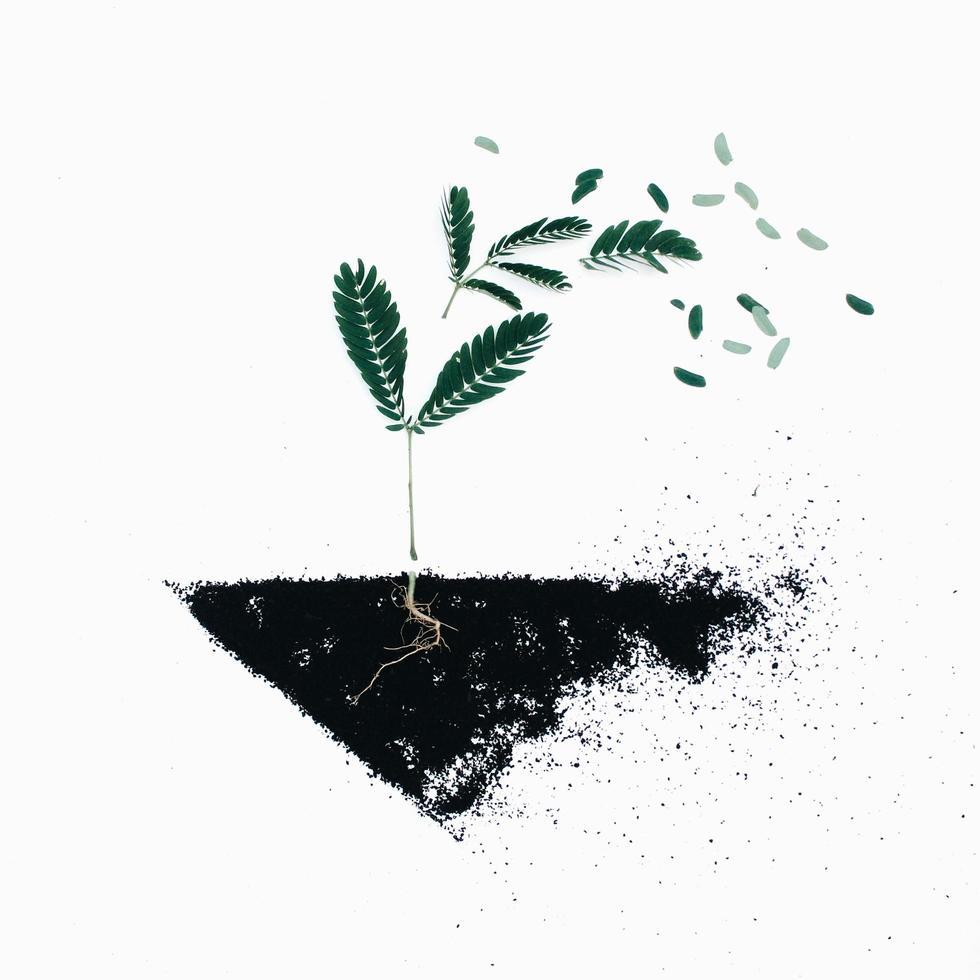 grüne Blattpflanzen auf schwarzer Bodenillustration foto
