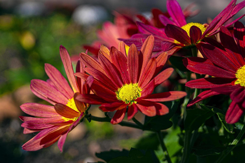 Blumen in der Sonne foto