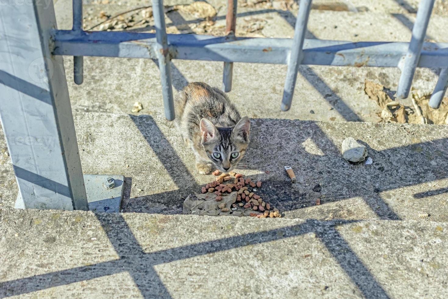 Gassenkatze isst Trockenfutter foto