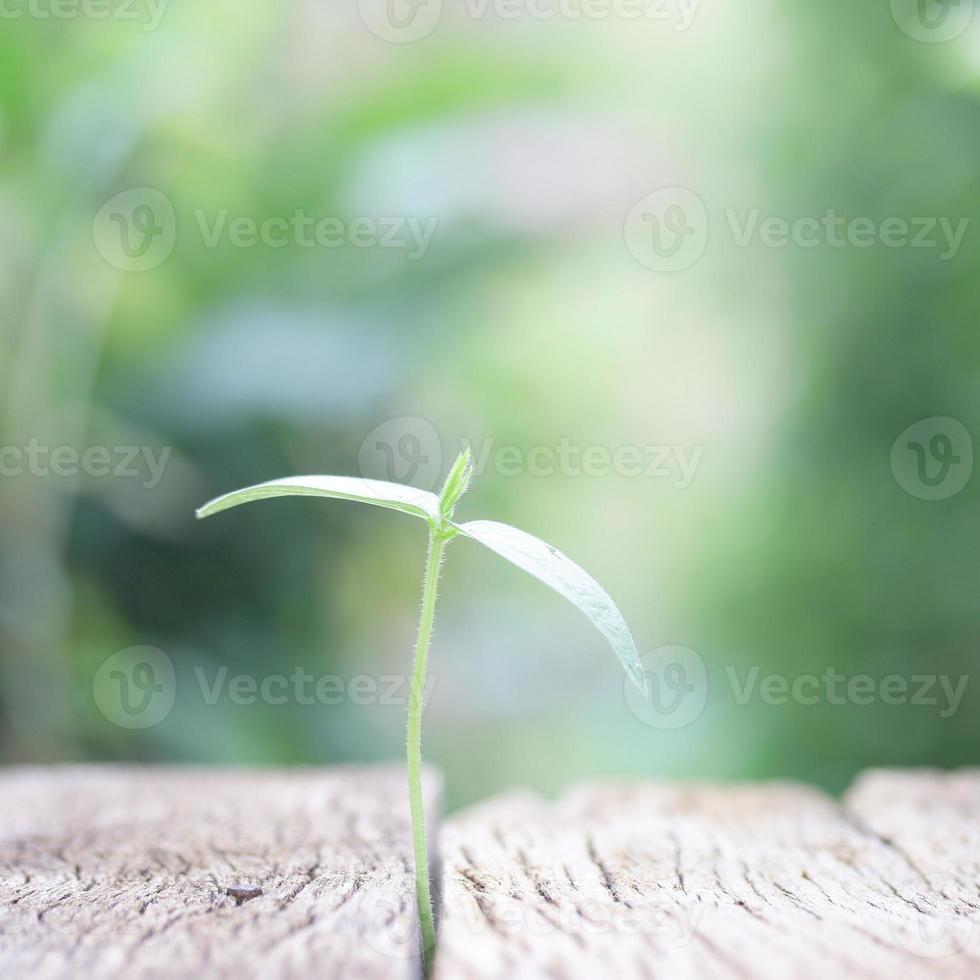 wachsende Pflanze auf Holztisch foto