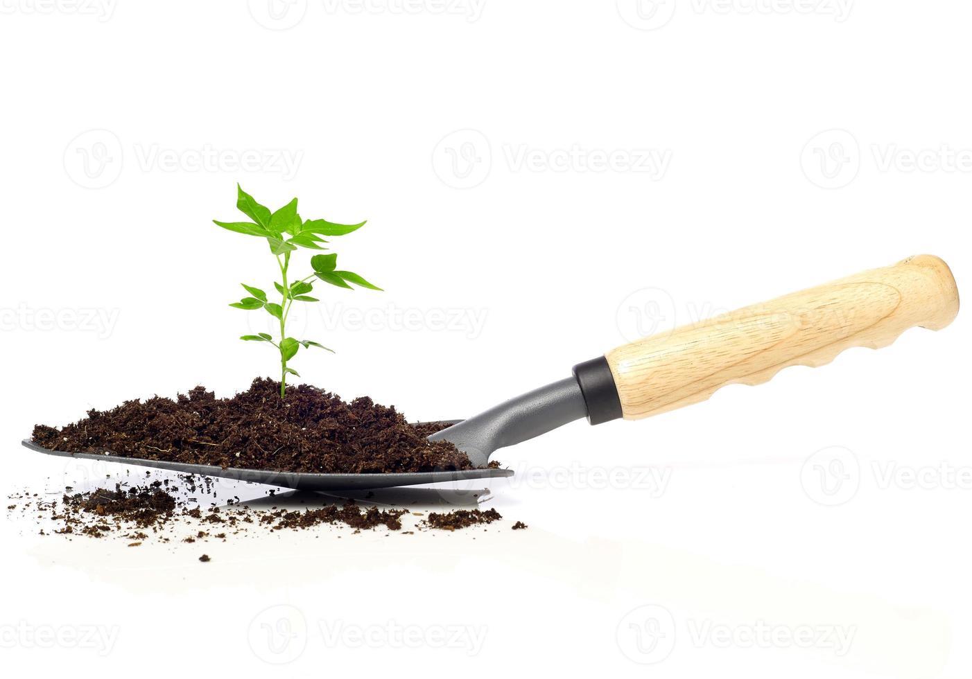 wachsender Baum auf einer Kelle foto
