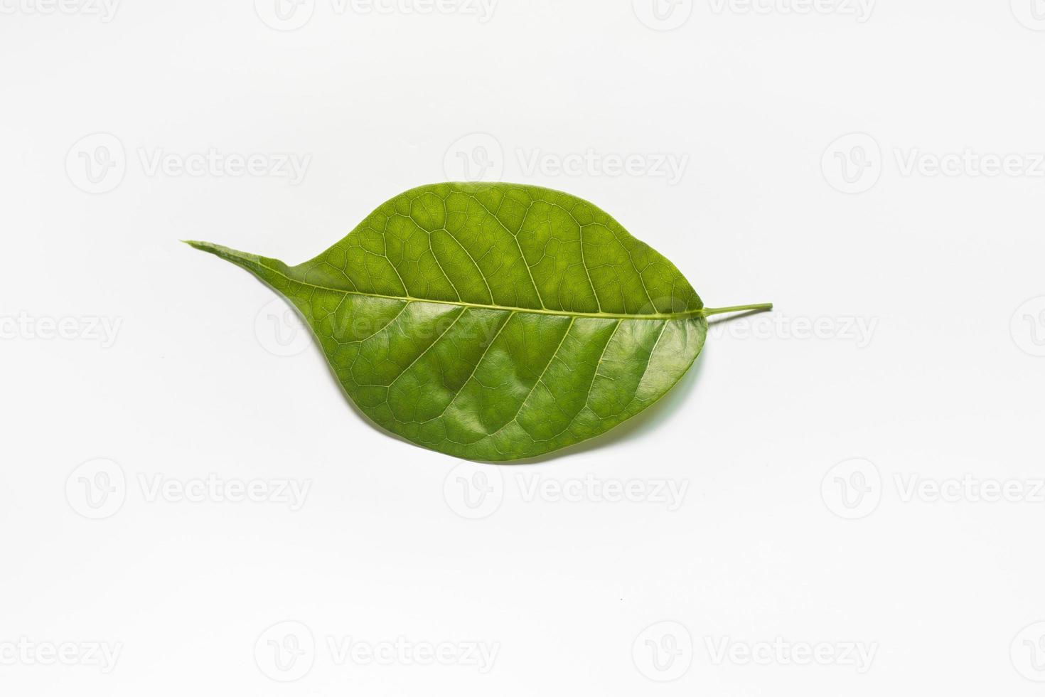 grünes Blatt. foto