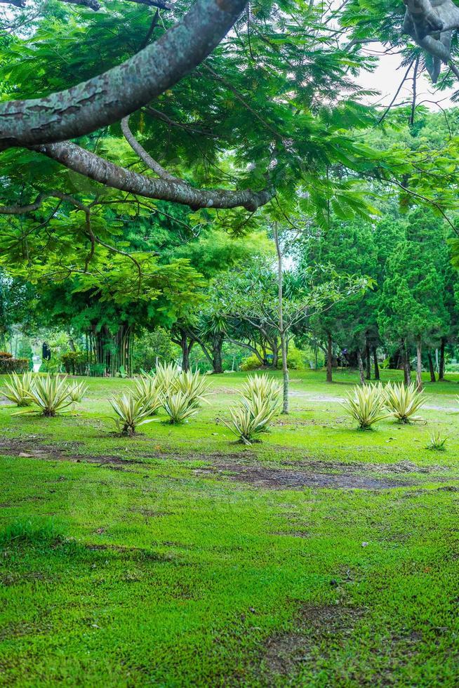 friedlicher Garten grüner Baum foto
