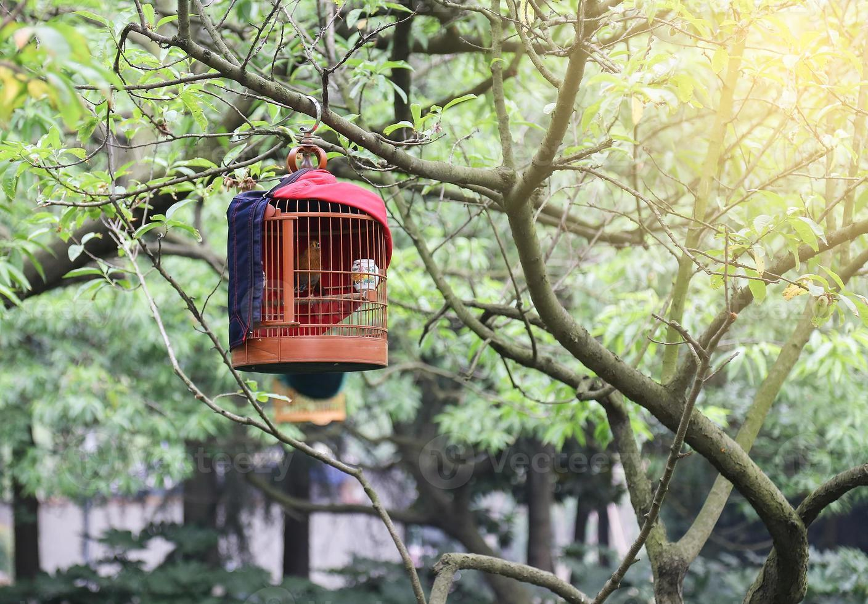 Vogelkäfig auf dem Baum foto