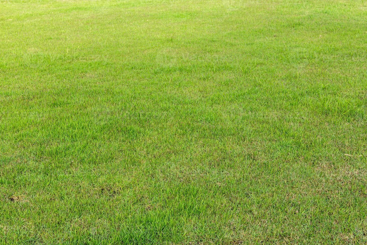 Rasen, Garten foto