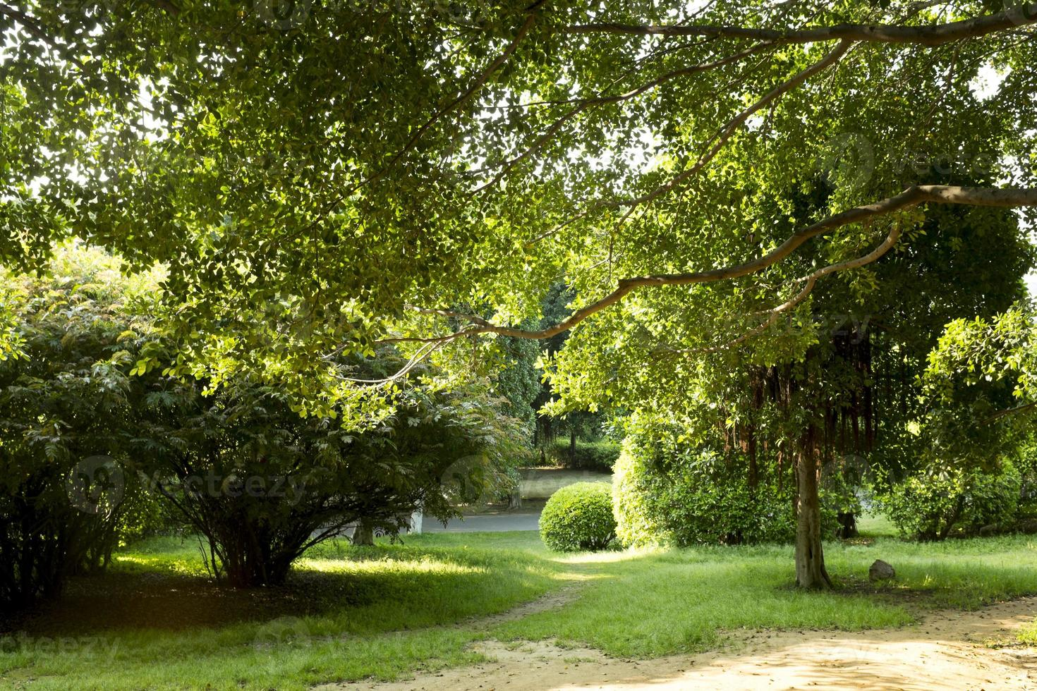 Garten mit einem frisch gemähten Rasen foto