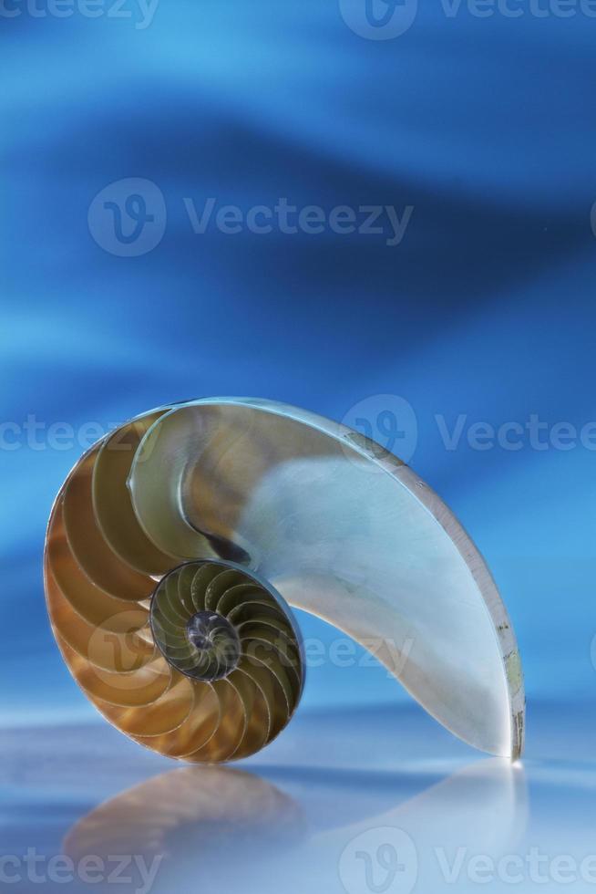 Nautilus foto