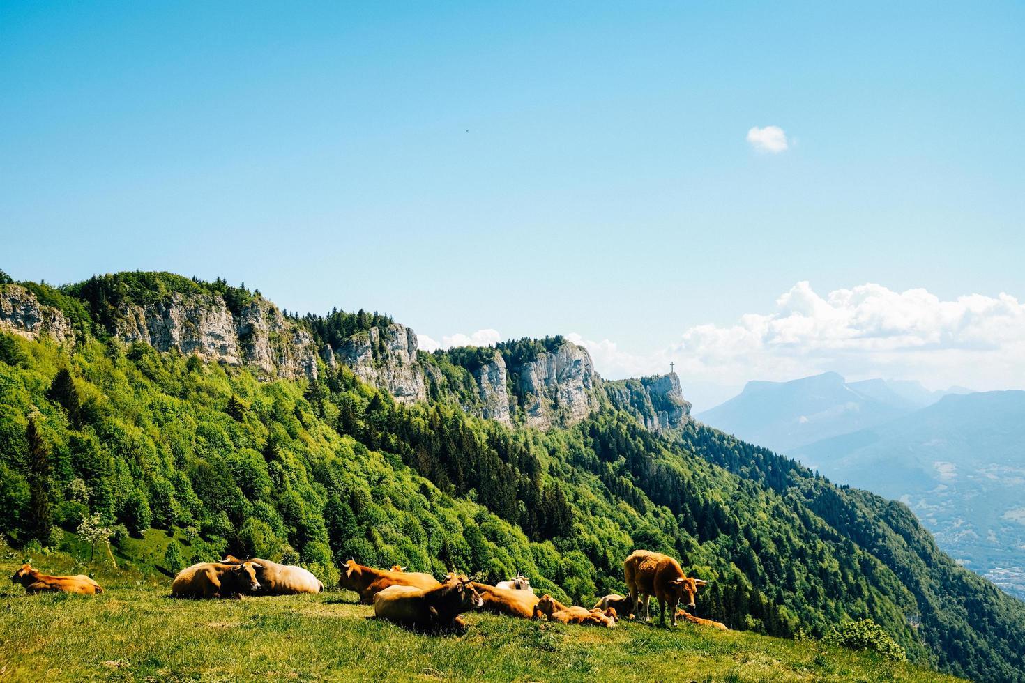 Vieh auf Grasfeld nahe Berg unter blauem Himmel foto