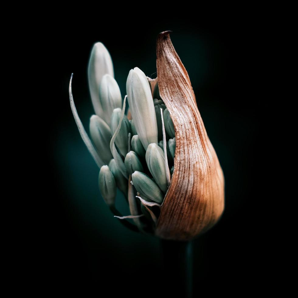 weiße Blume auf schwarzem Hintergrund foto