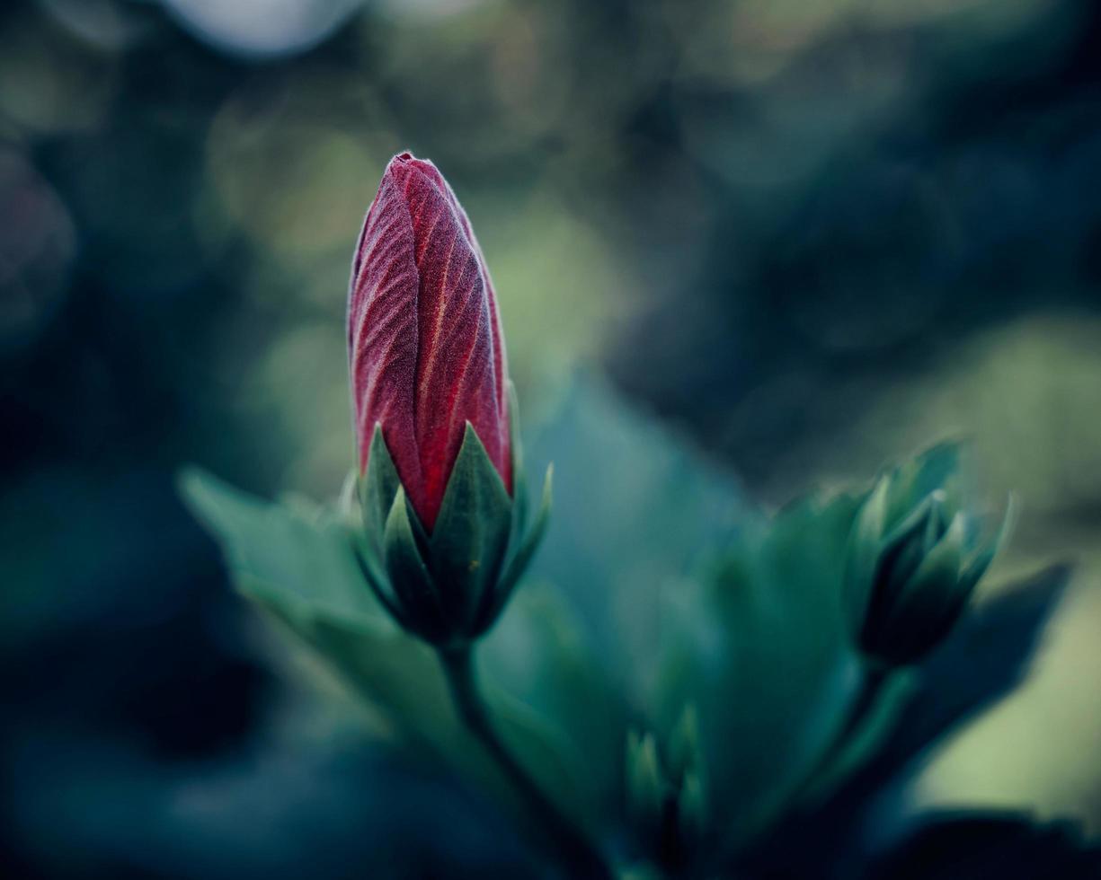 selektiver Fokus Blumenfotografie foto