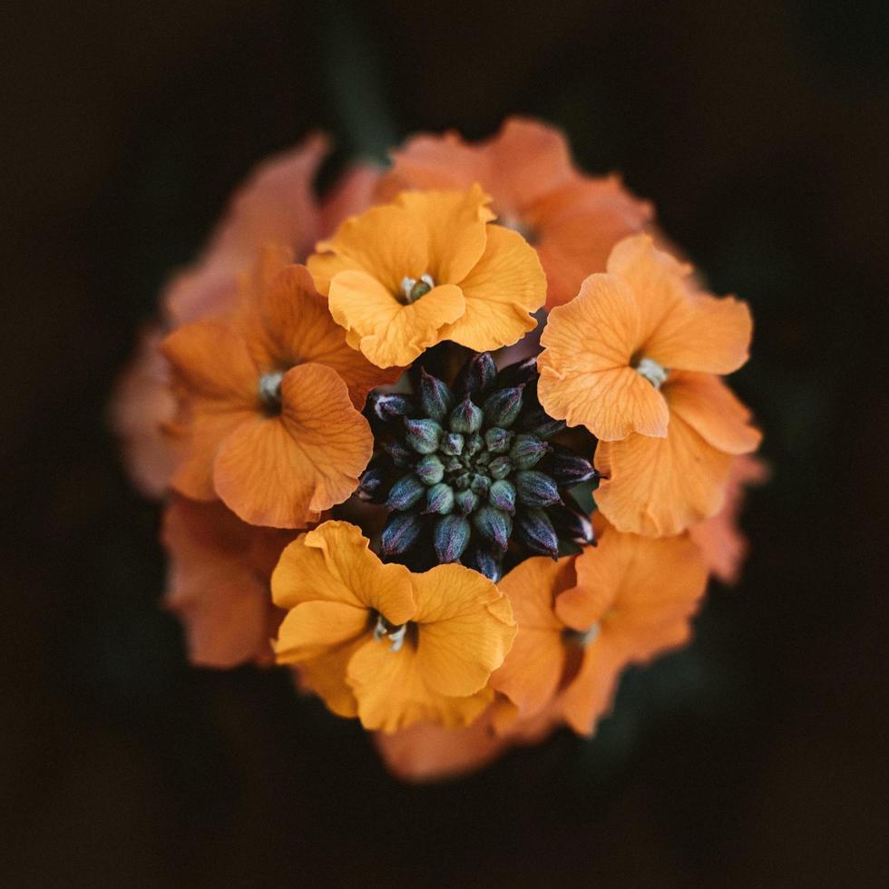 selektive Fokusfotografie von orangefarbenen Blumen foto