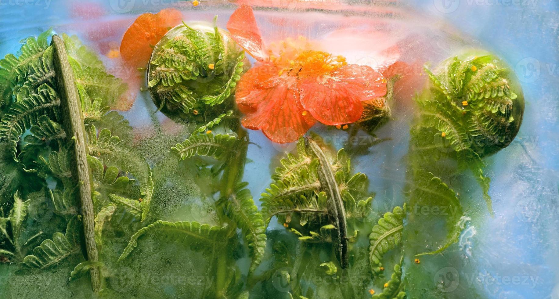 gefrorene Blume von Bennet und Farn foto