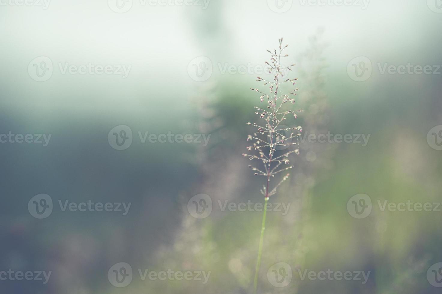 Strukturen von blühendem Gras weiche Unschärfe foto