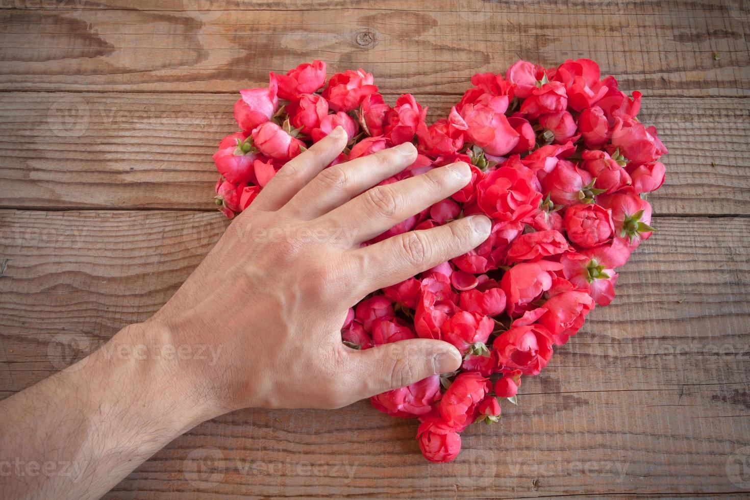 Herz aus roten Rosen von einer Hand bedeckt foto