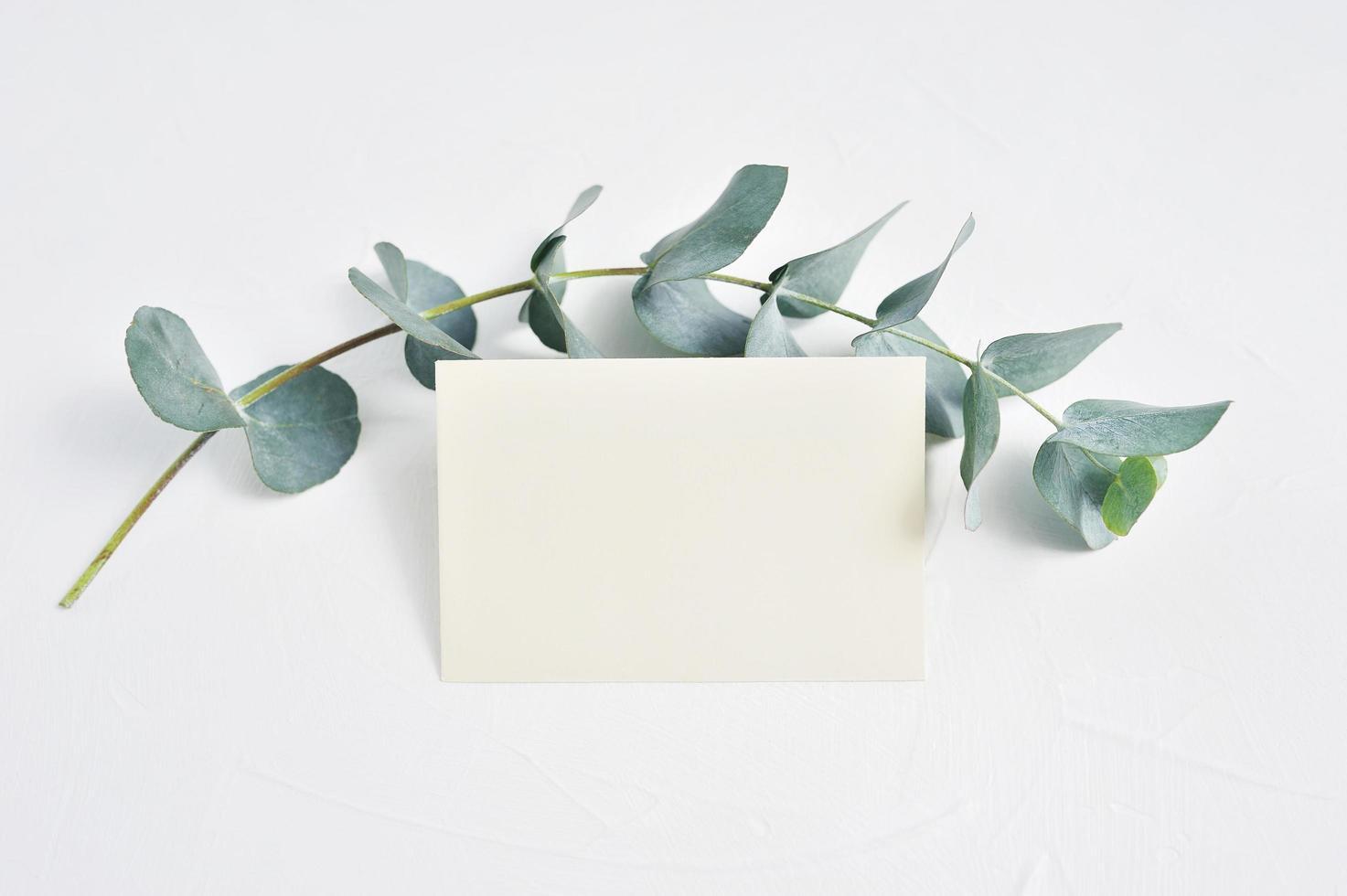 Modell von Eukalyptusblättern und Papier foto