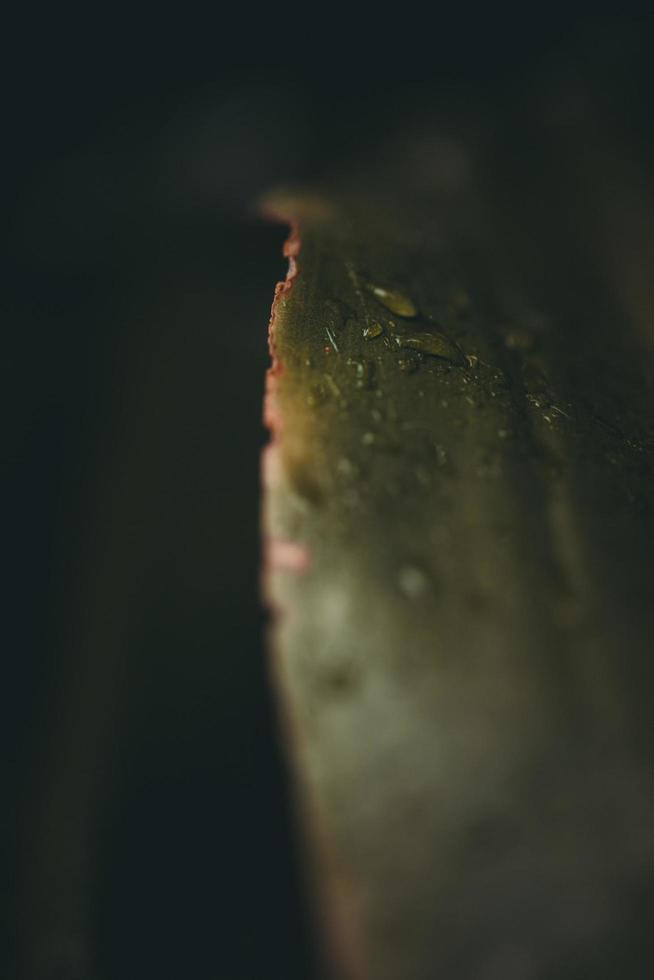 Makroansicht des grünen Blattes foto