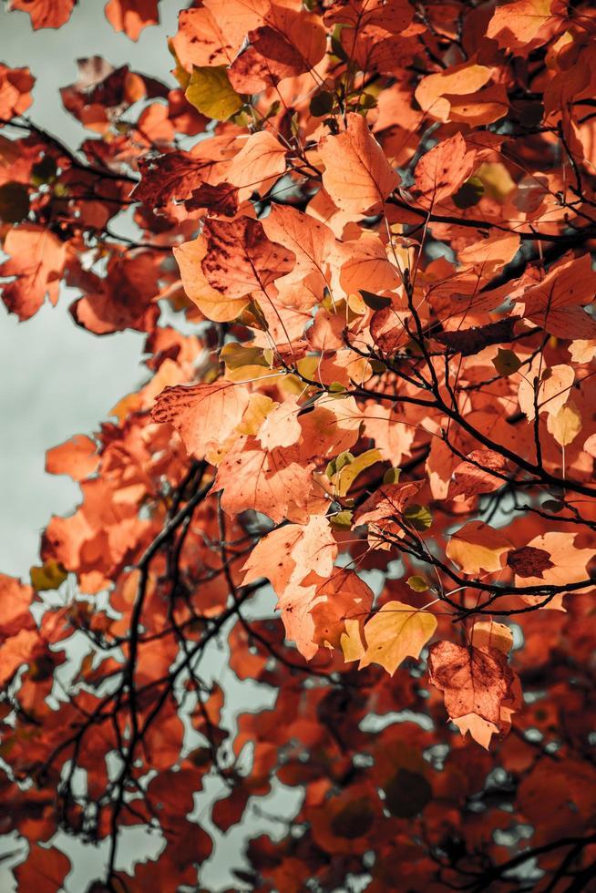 braune Herbstblätter foto