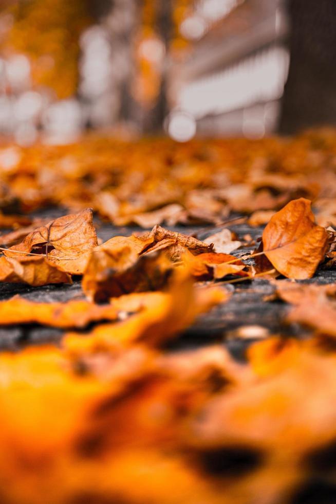 braune getrocknete Blätter foto