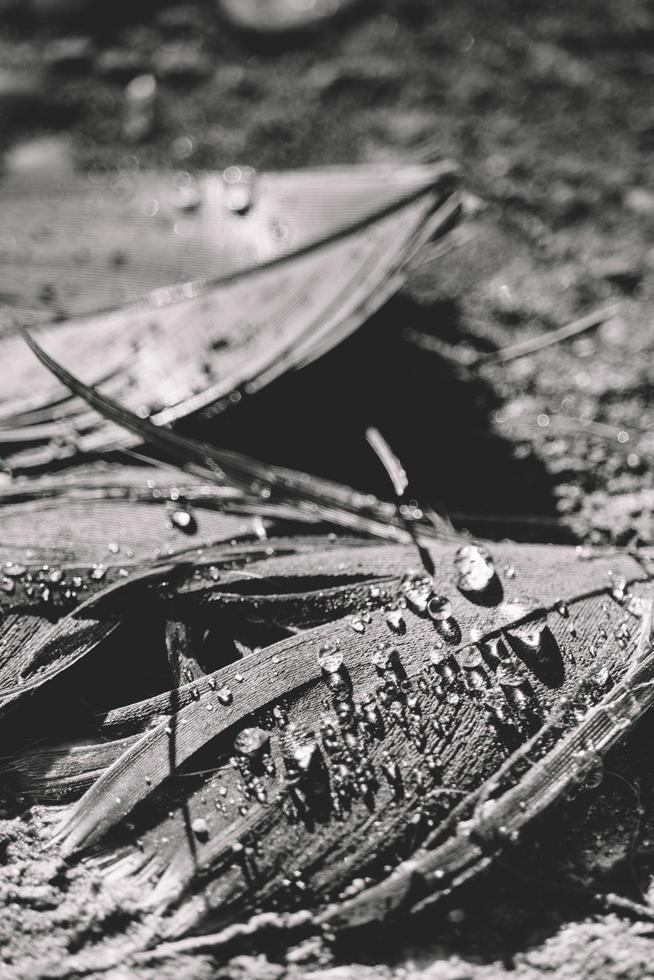 Graustufenfoto von Wassertropfen foto