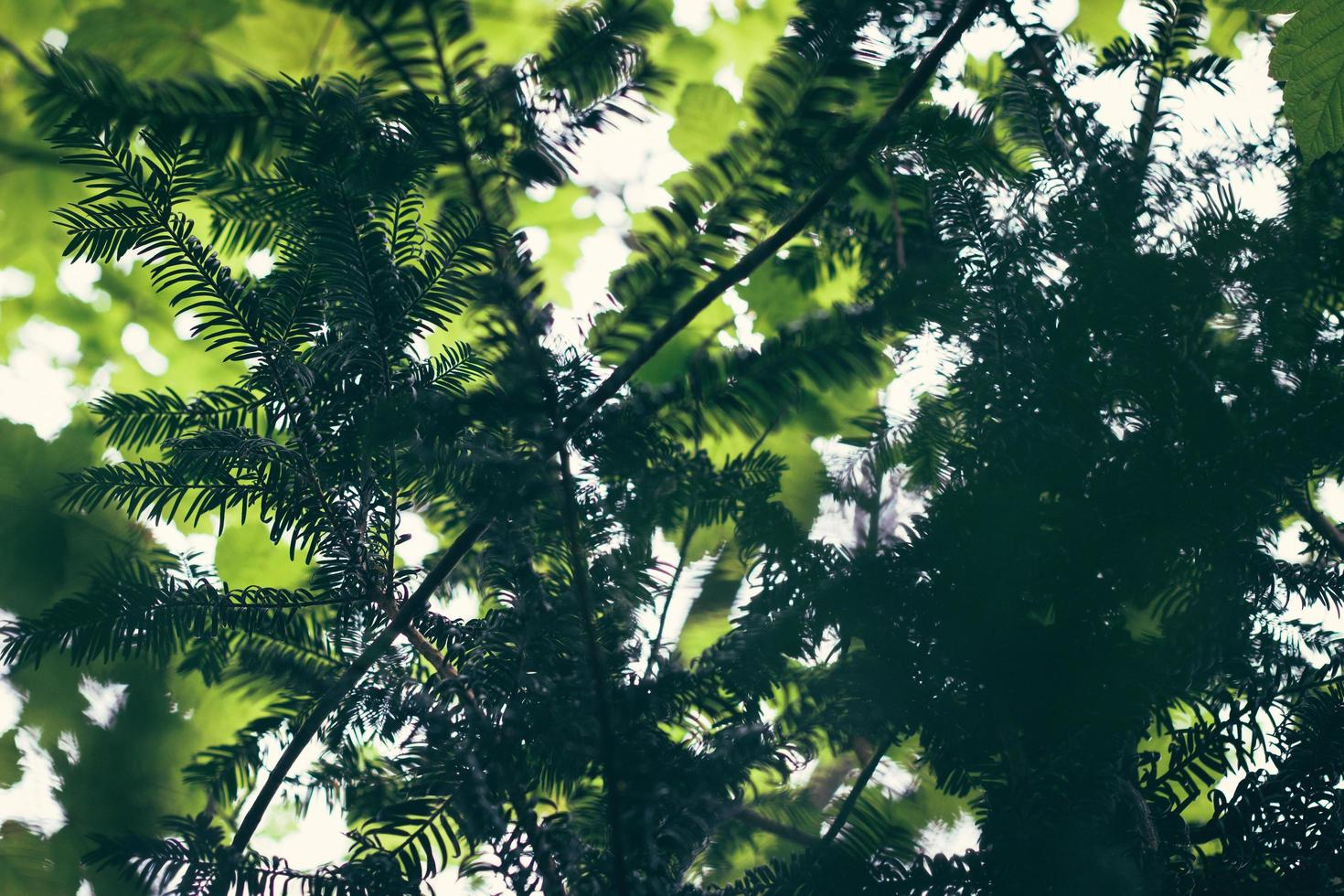 selektiver Fokus Nahaufnahme des Baumes foto