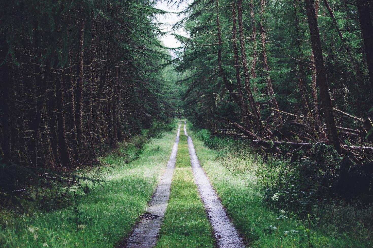 Grasstraße zwischen Waldbäumen foto