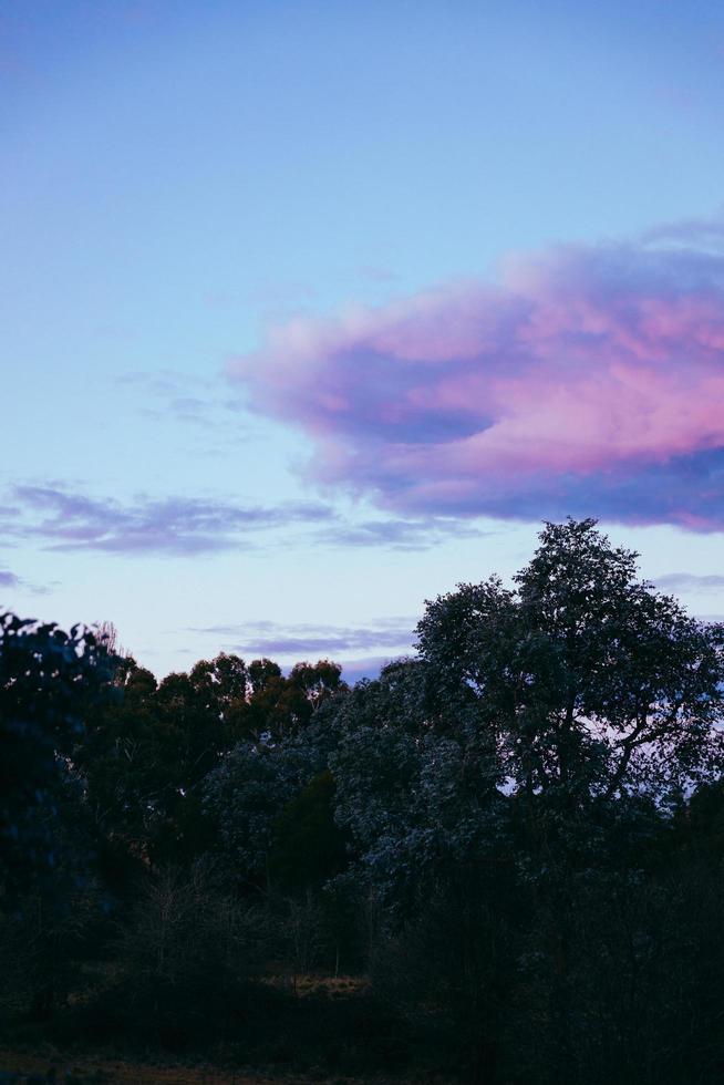 grüne Bäume unter lila Wolken foto