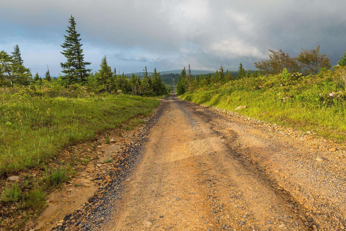 Feld- und Schotterstraße durch einen Wald foto