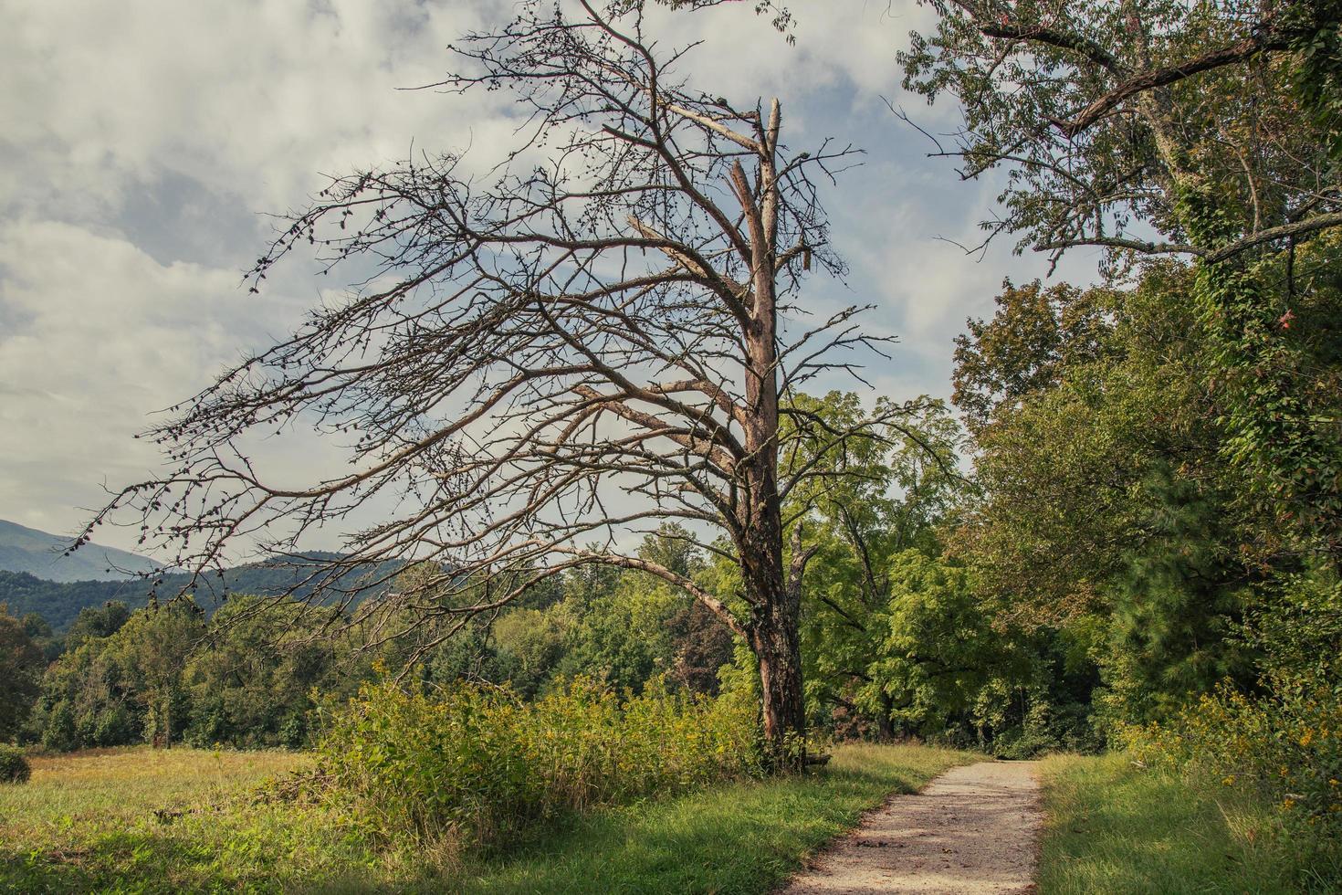 Weg in einen Wald foto