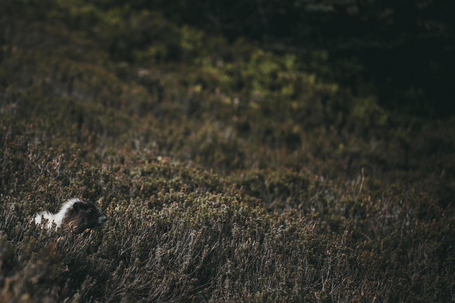 Tier mit Gras bedeckt foto