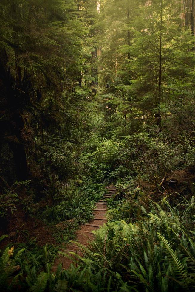 Holzweg inmitten grüner Bäume foto