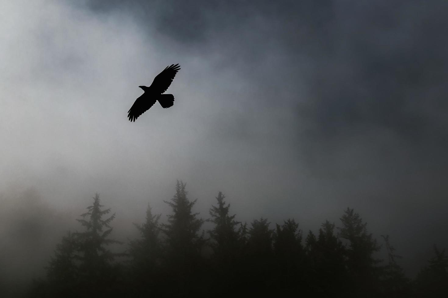 fliegende Vogel Silhouette in der Nähe von Bäumen foto