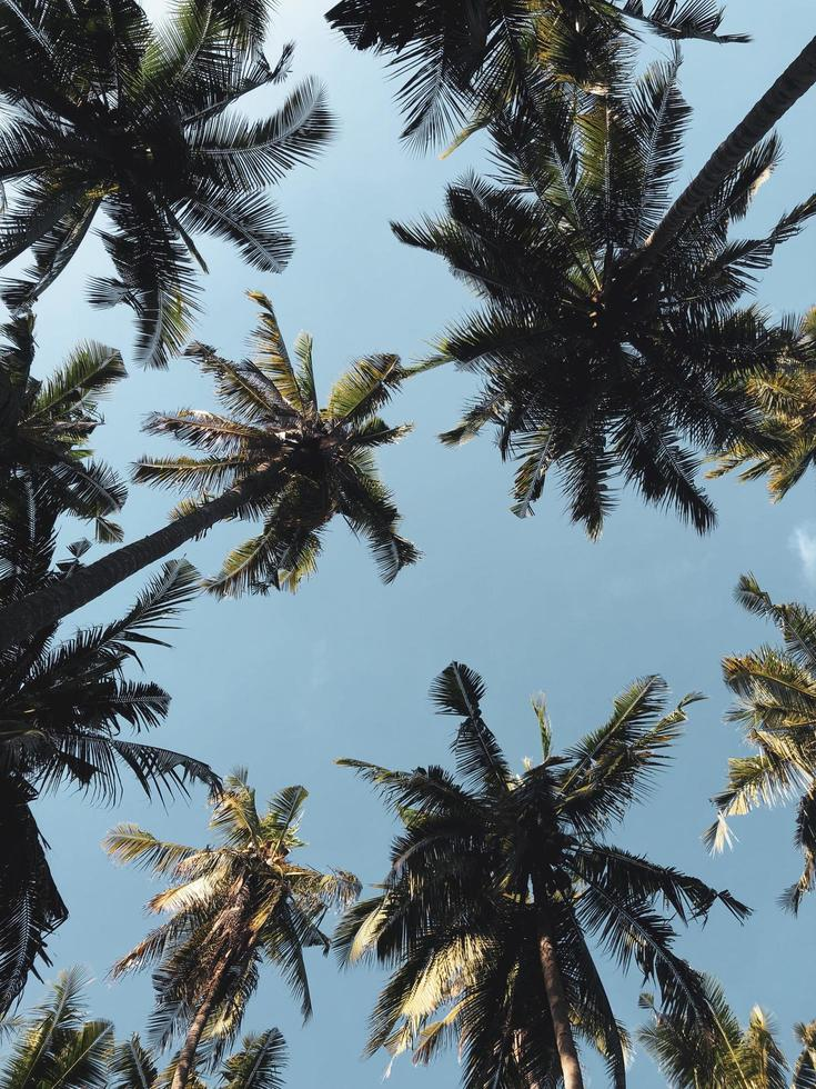 Low Angle Fotografie von Kokospalmen foto