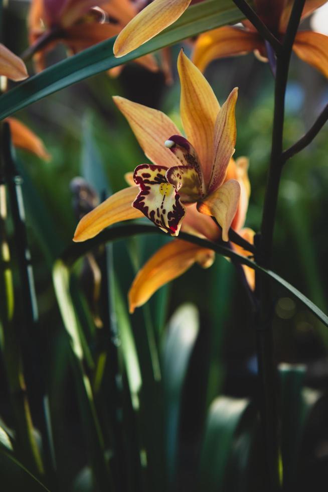 gelbe Blütenblattblume foto