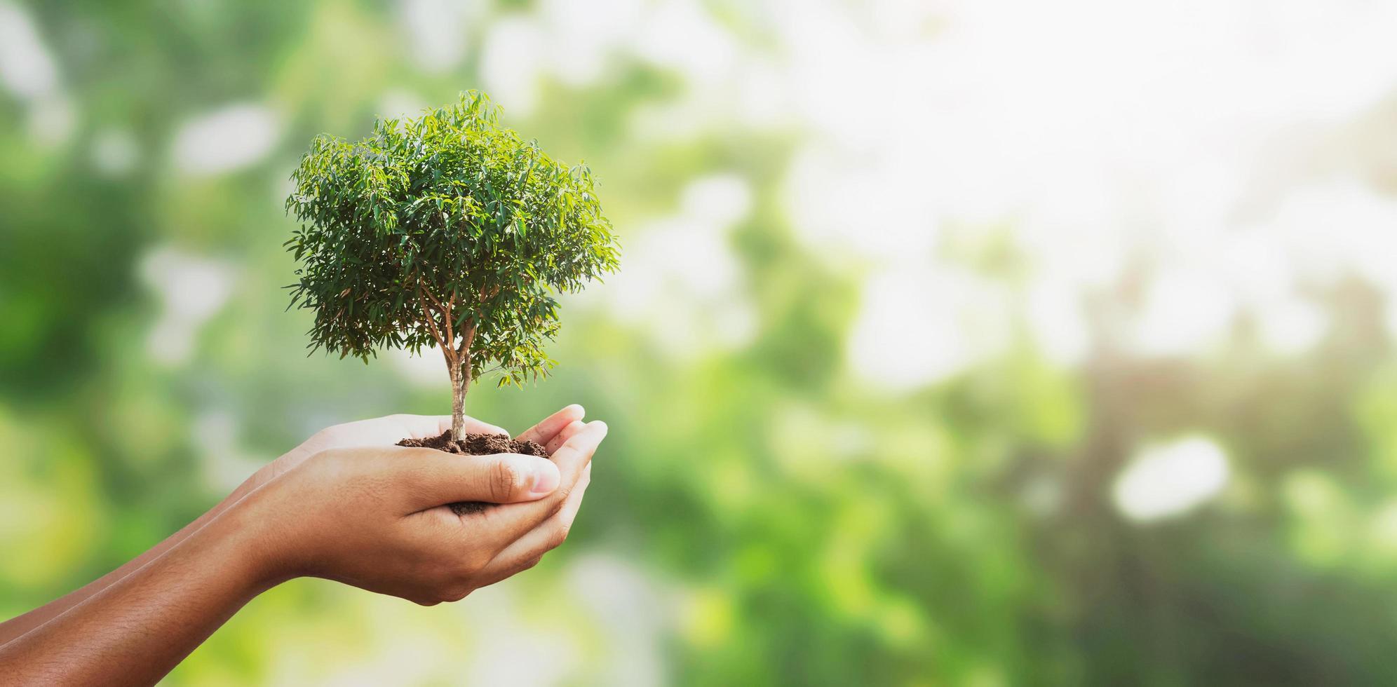 Hand hält einen kleinen Baum foto