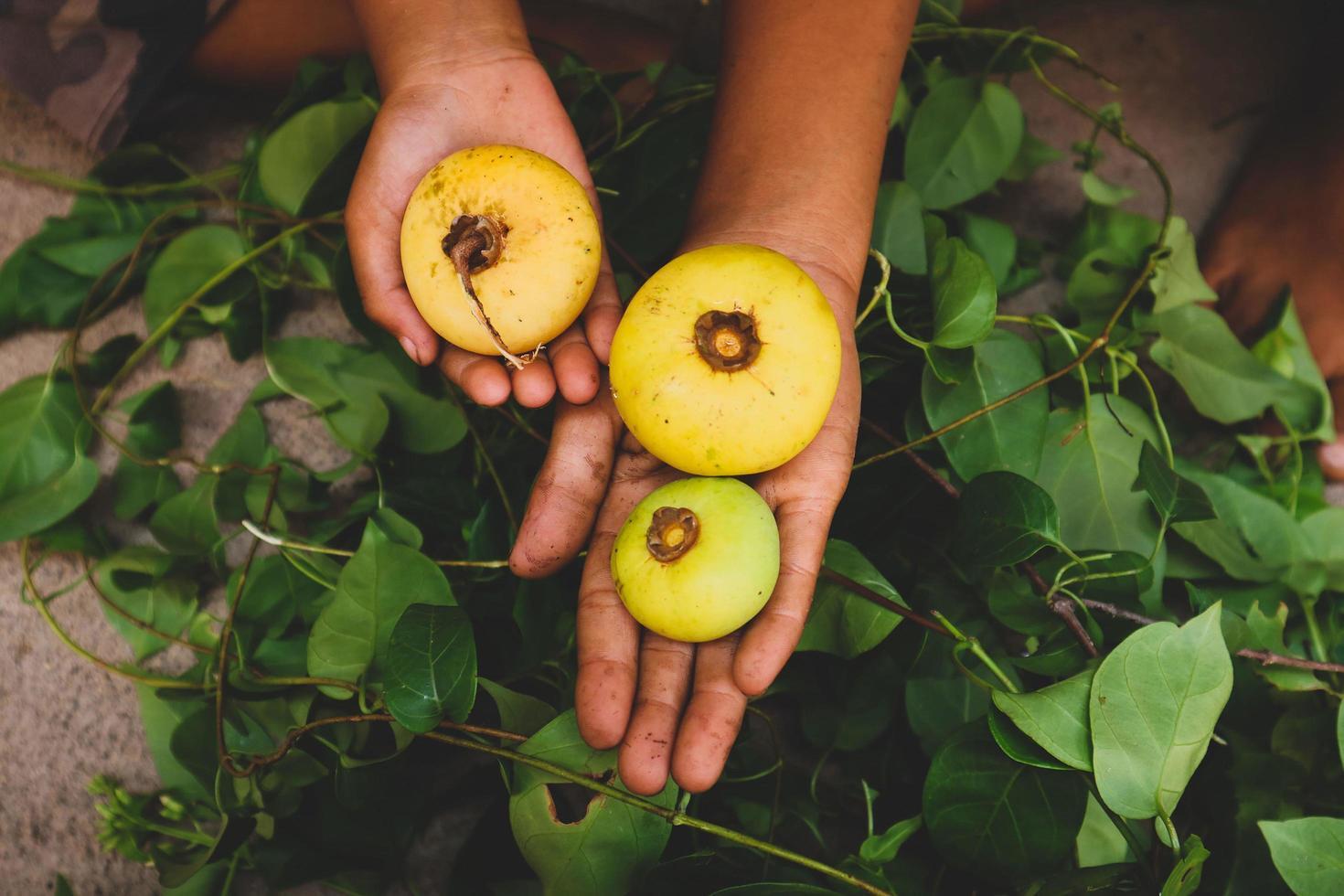 Person, die runde Früchte hält foto
