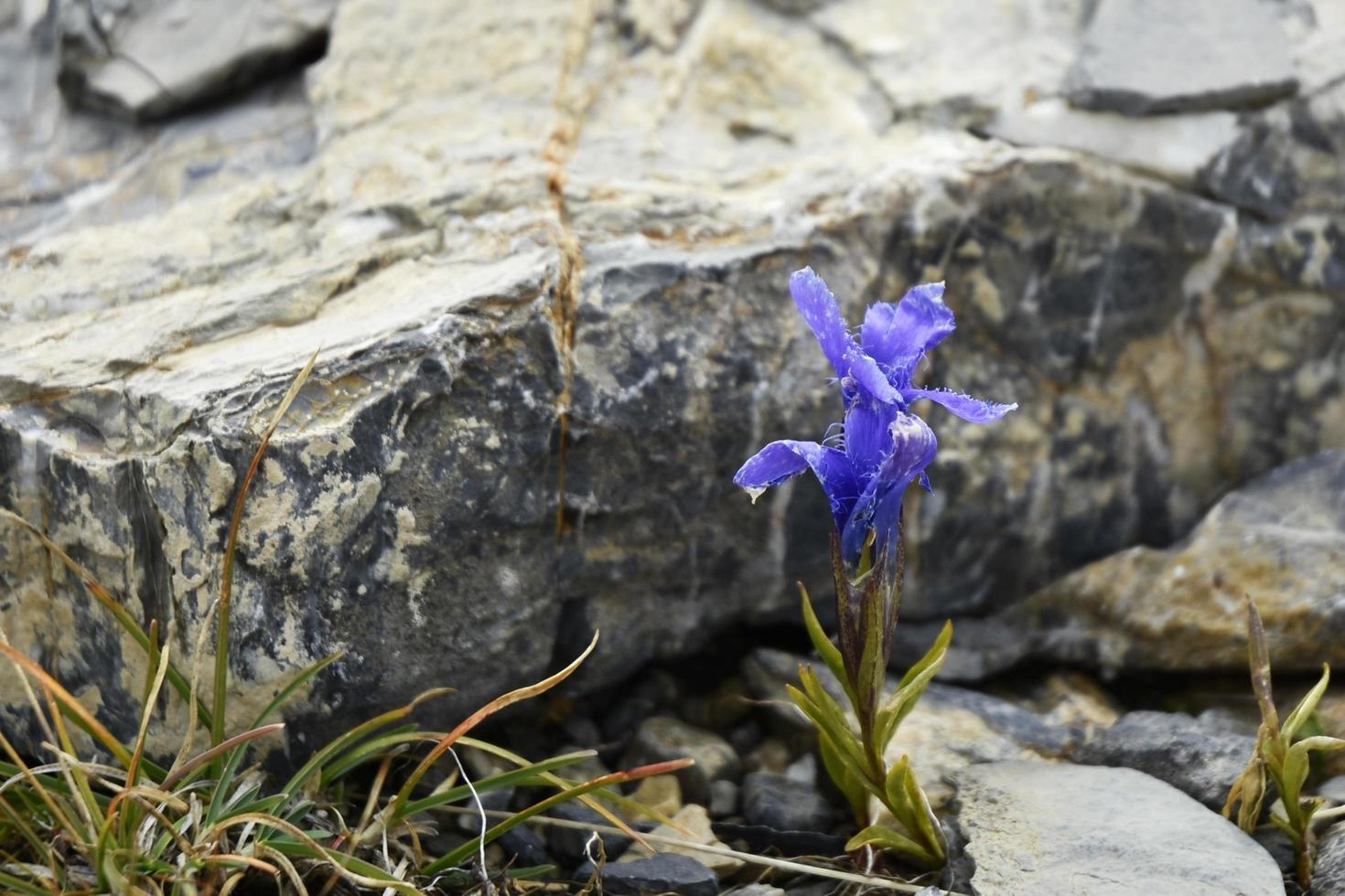 lila Blütenblüte foto