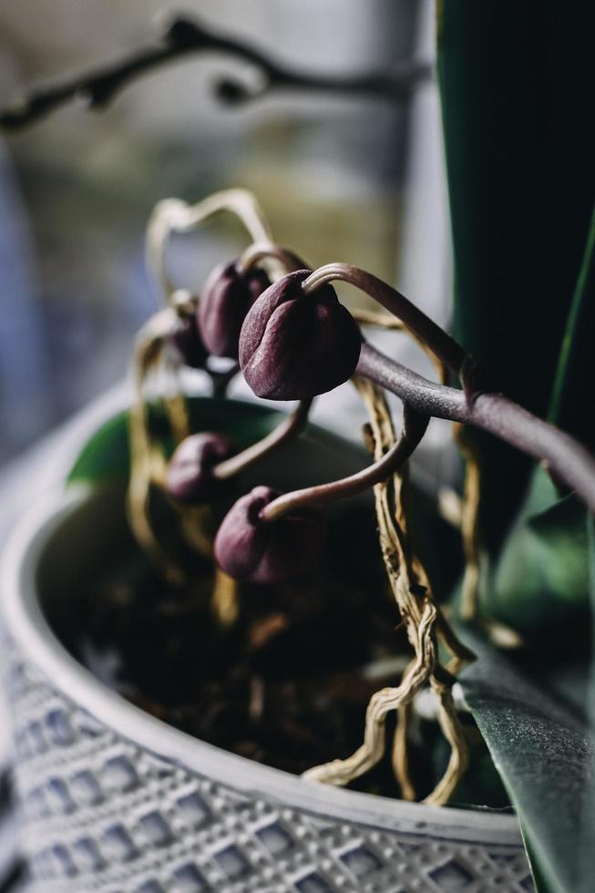 Nahaufnahme der Orchideenpflanze foto