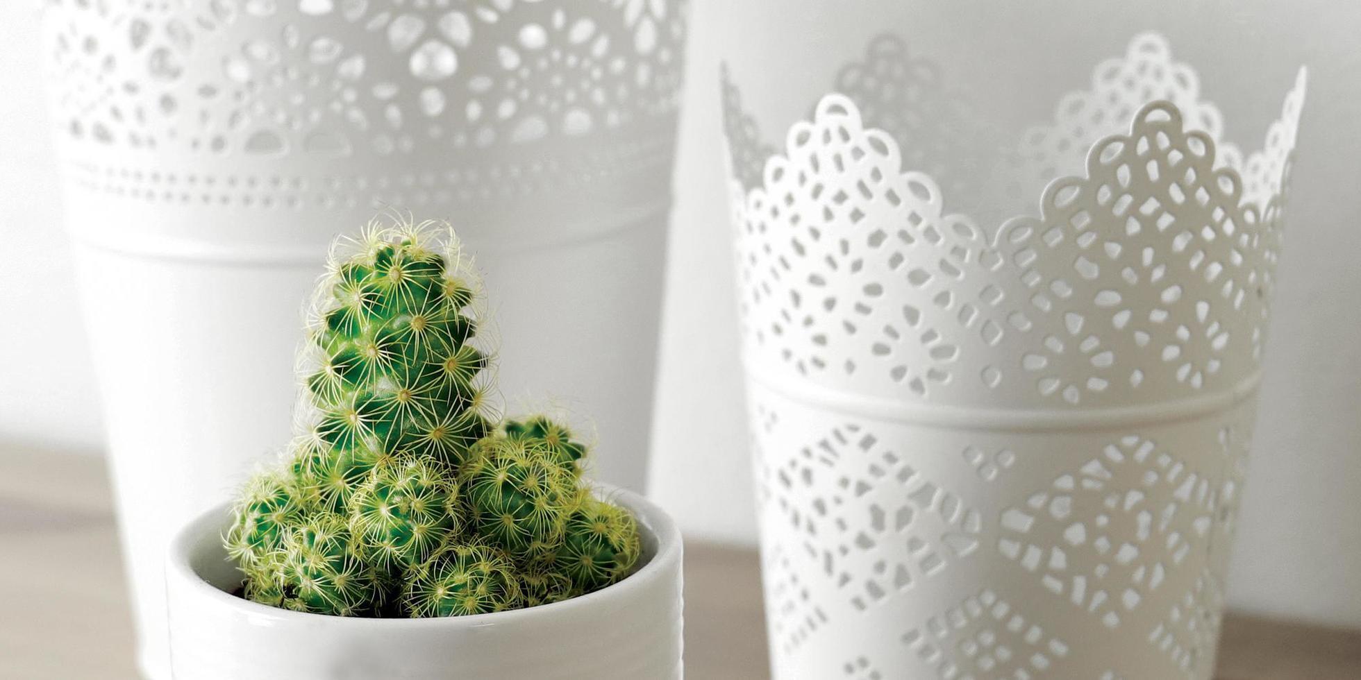 Kaktus in der Nähe von weißen Bings foto