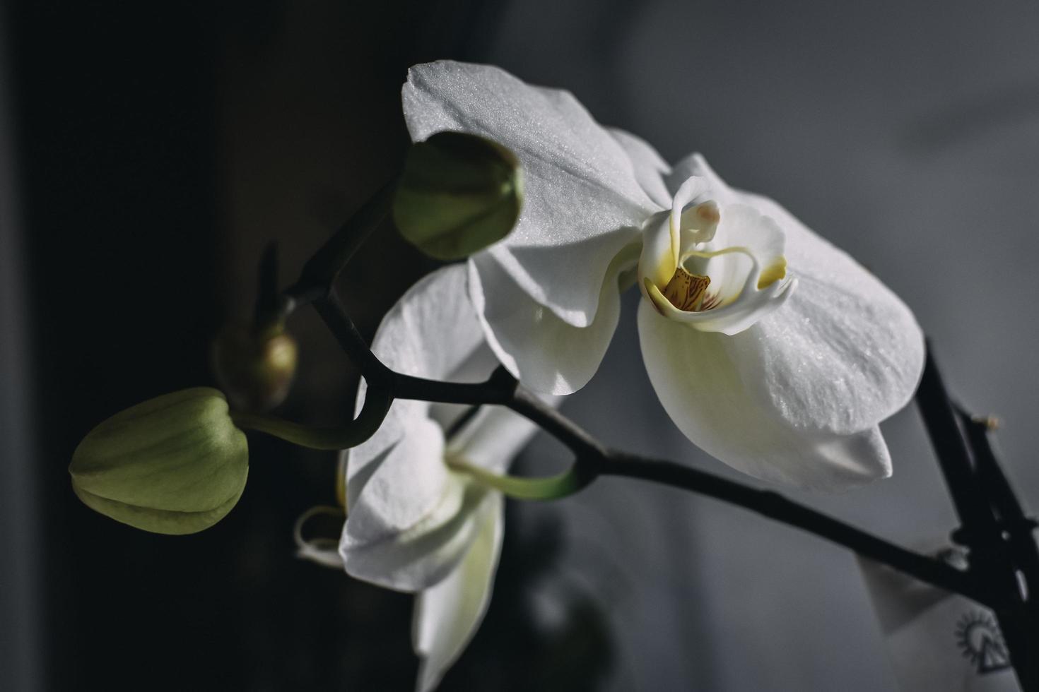 weiße Orchidee drinnen foto