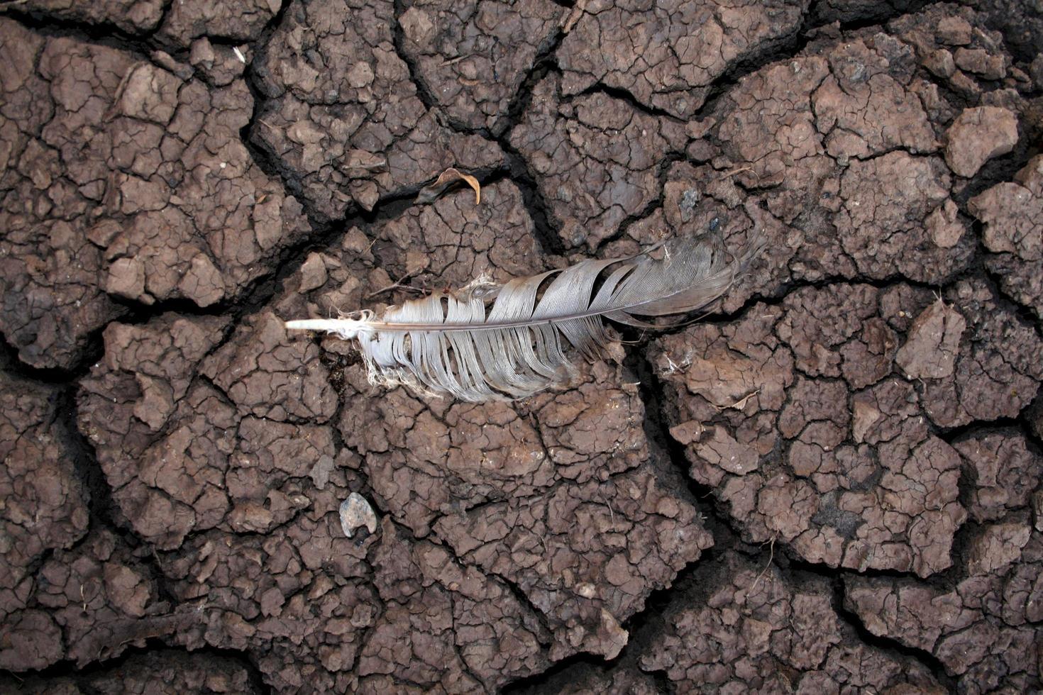 Dürre zeigt rissigen trockenen Schlamm foto