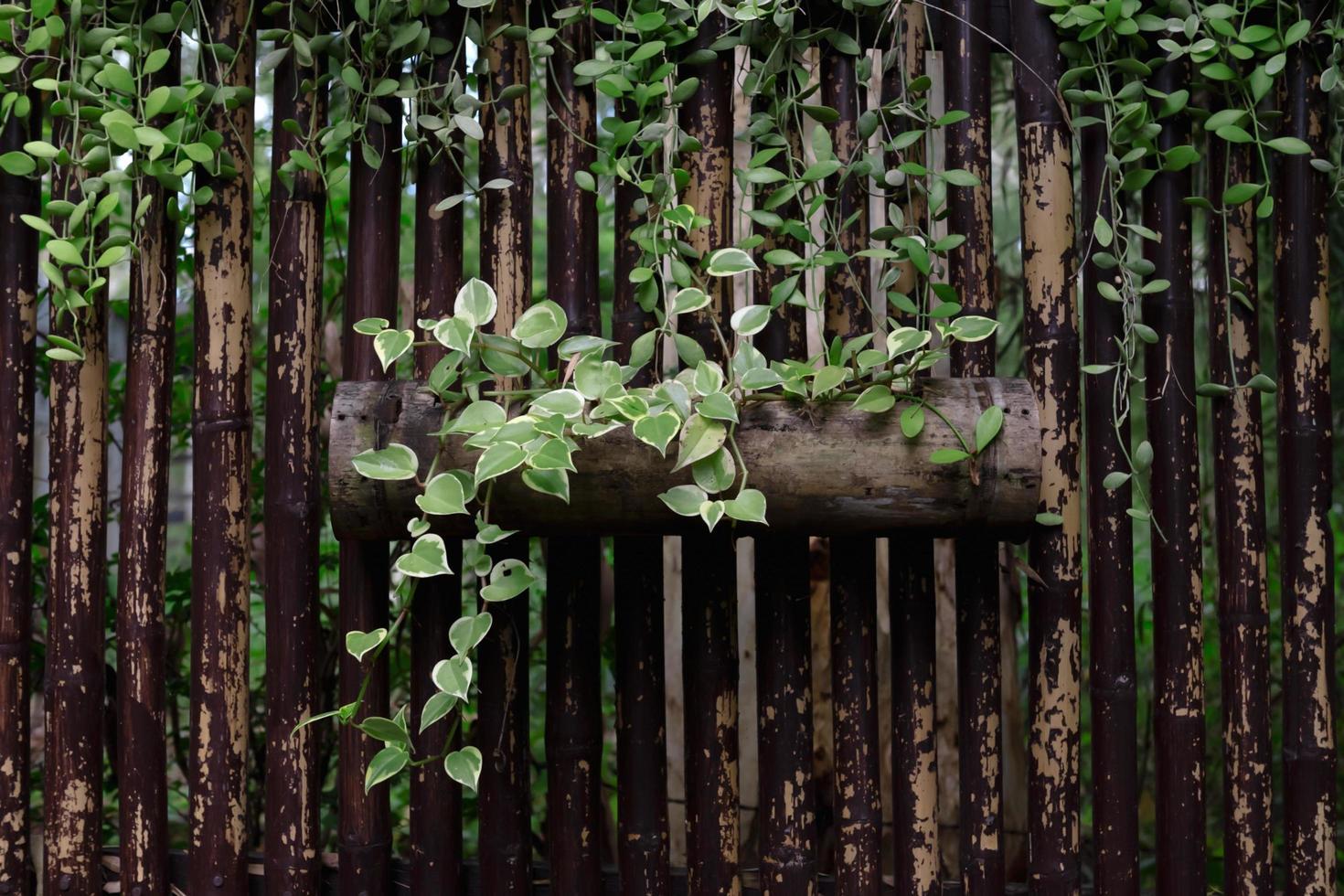 Efeu wächst auf einem Baumstamm foto