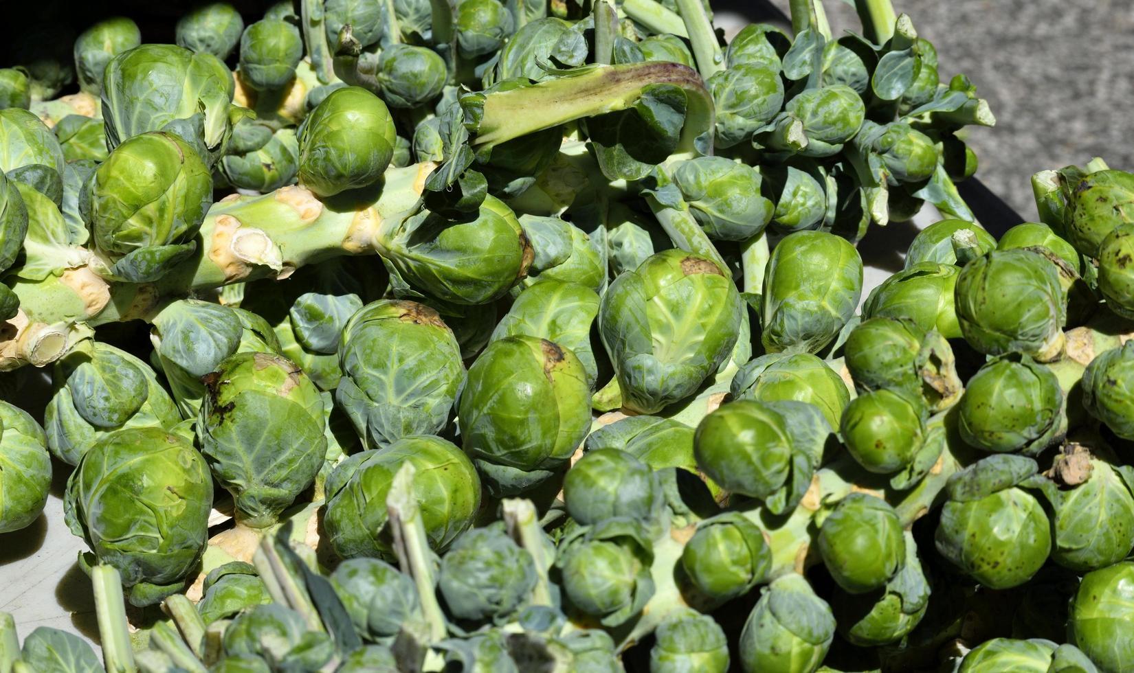 Rosenkohl auf dem Markt foto