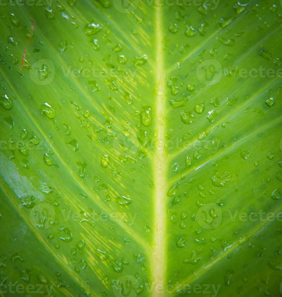 Wassertropfen auf den grünen Blättern foto
