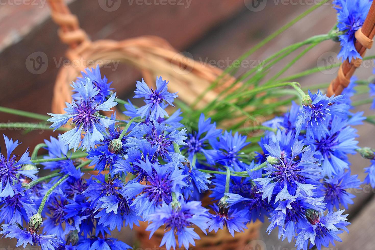 wilde Blumen auf dem Feld foto