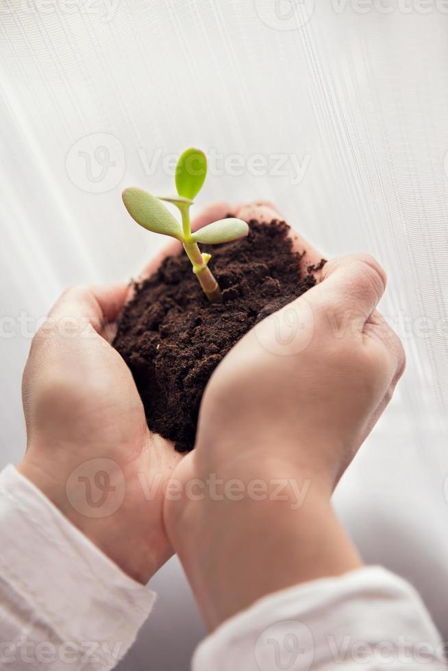 Nahaufnahme der weiblichen Hände, die grüne Pflanze halten foto